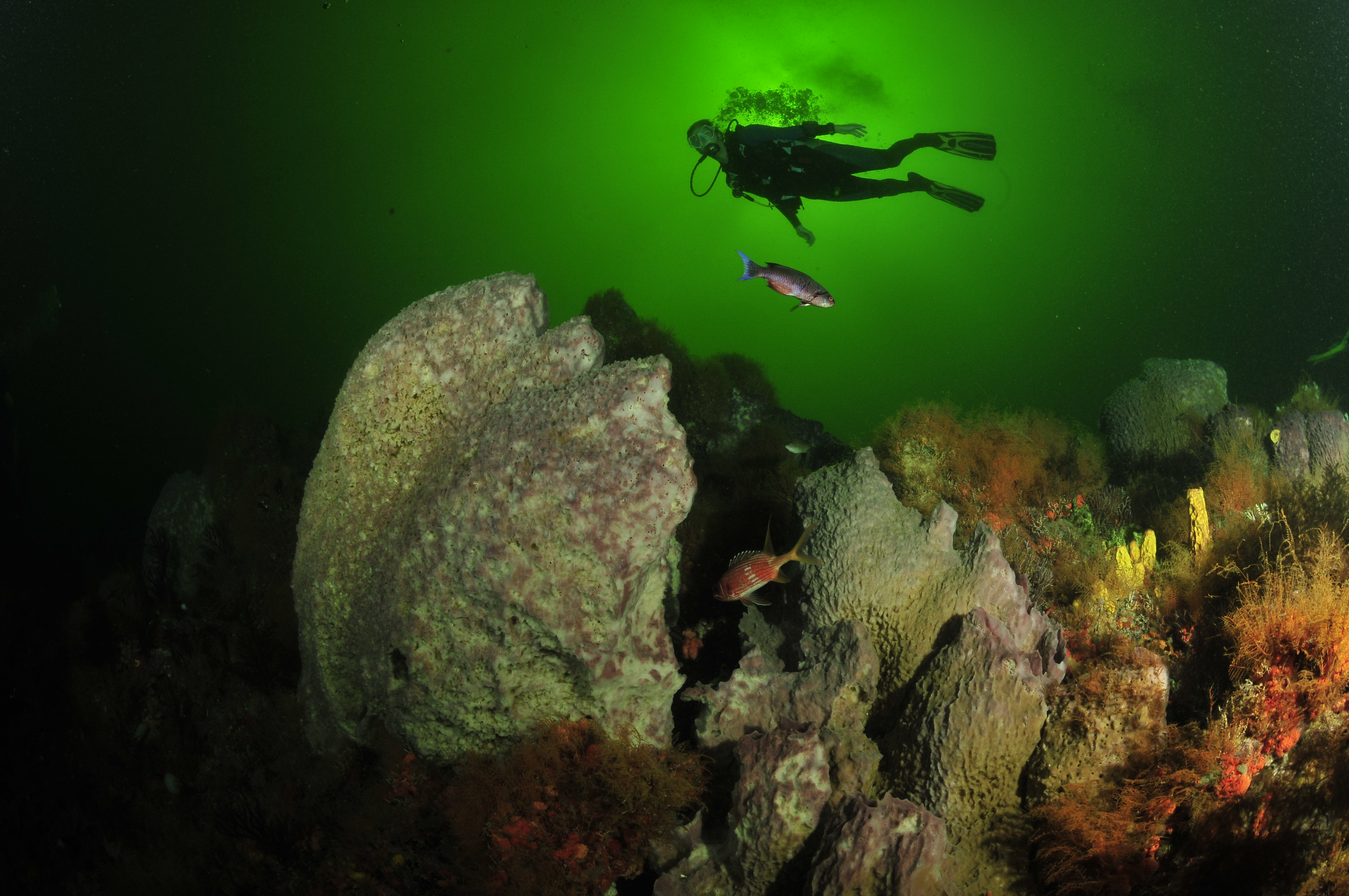 A diver enjoys the scenery during a dive at the Tobago Underwater Carnival